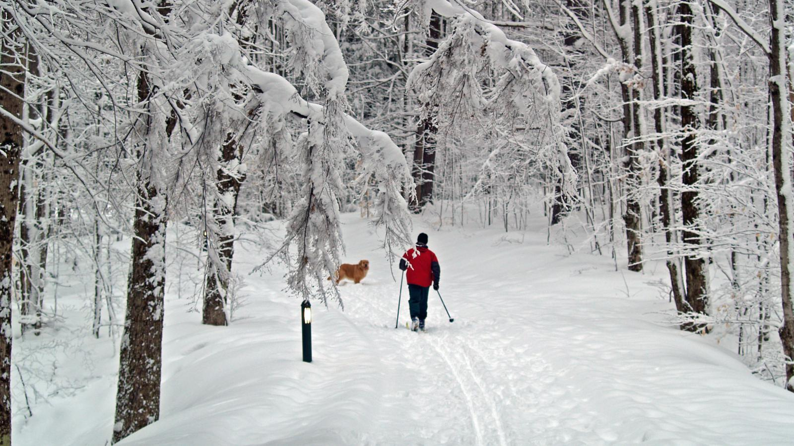 Cross Country Skiing in Gaylord