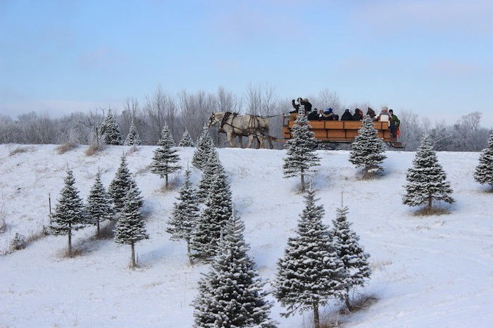 Sleigh Ride at Red Flannel Christmas Tree Farm - Start A Tradition At These Michigan Christmas Tree Farms Michigan