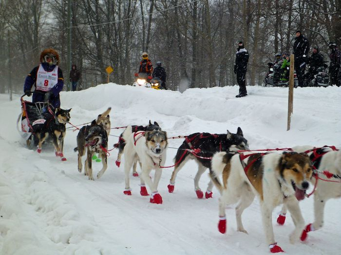 How to Experience Dog Sledding in Michigan | Michigan