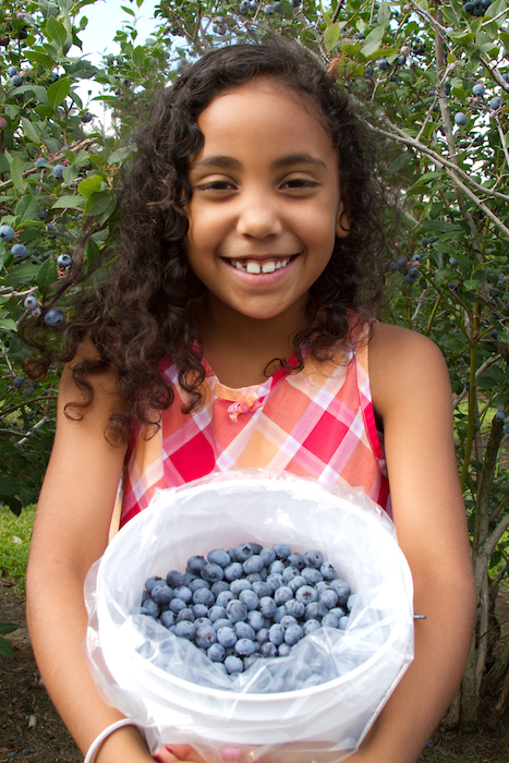 Blueberry picking in Holland