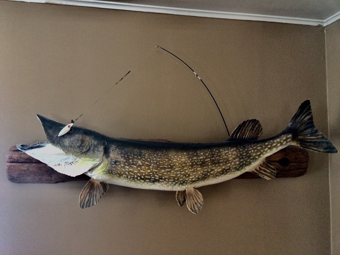 Northern Pike from Portage Lake