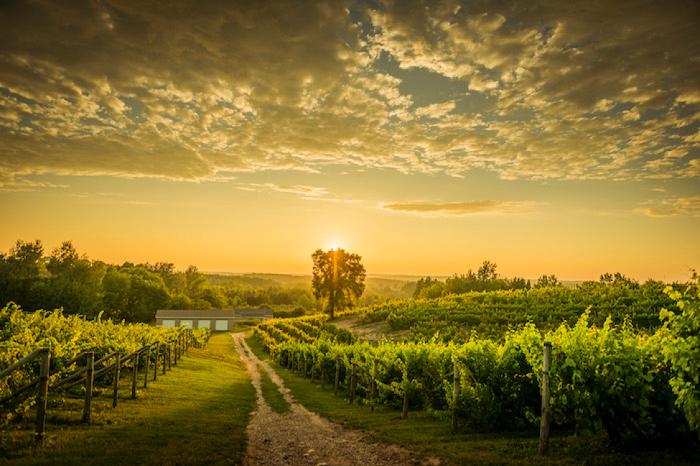 Traverse City Vineyards