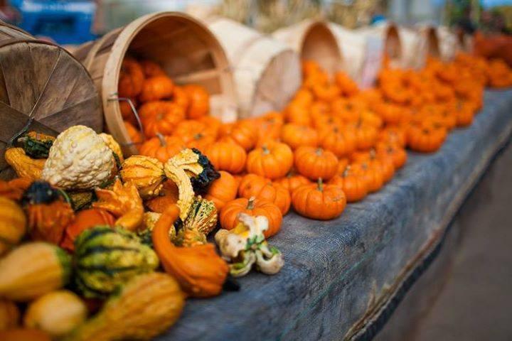 fall pumpkins_0.jpg