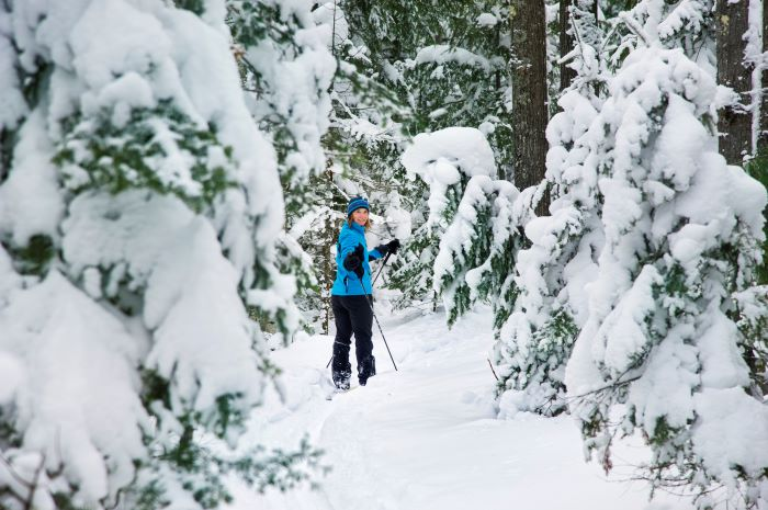 Woman cross country skiing in snowy forest
