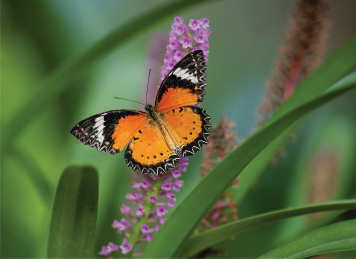 Butterfly resting on flower