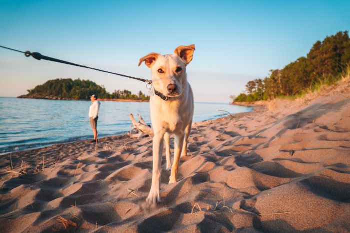 Leashed dog on Little Presque Isle Beach